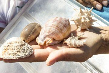 ecosistema marino ew costiero laboratorio didatticoNaturalmente elba_1