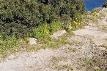 sentiero elbanoIsola d'Elba escursione pomeriggio_1