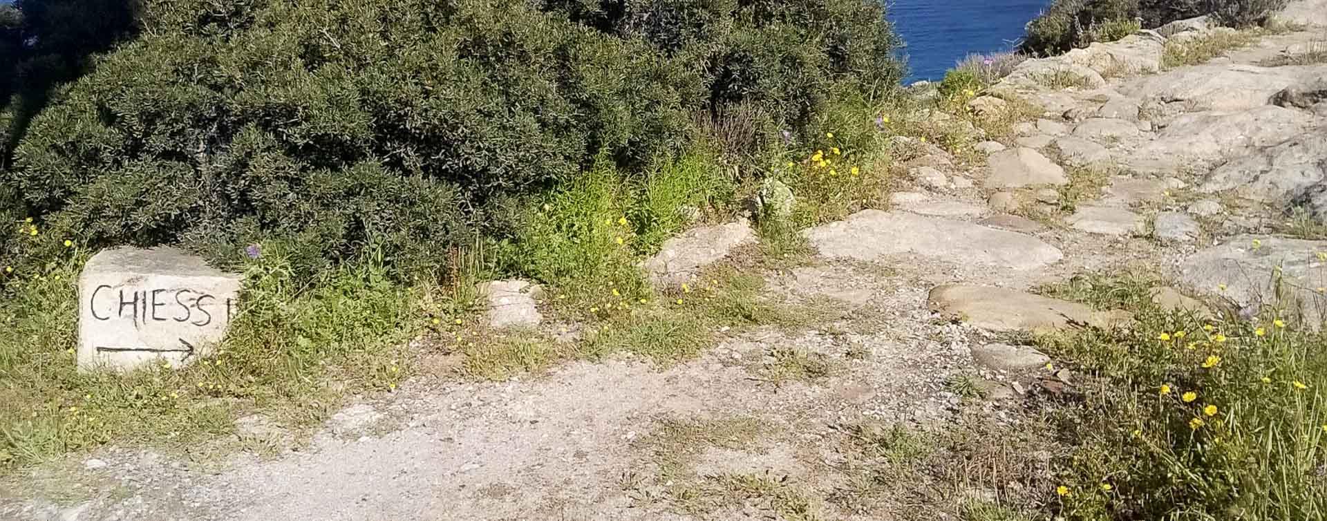 Fiori Gialli Isola Delba.Trekking Di Primavera All Isola D Elba Naturalmente Elba